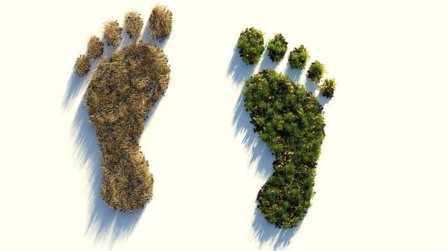 Hoe ga jij je ecologische voetafdruk verkleinen?